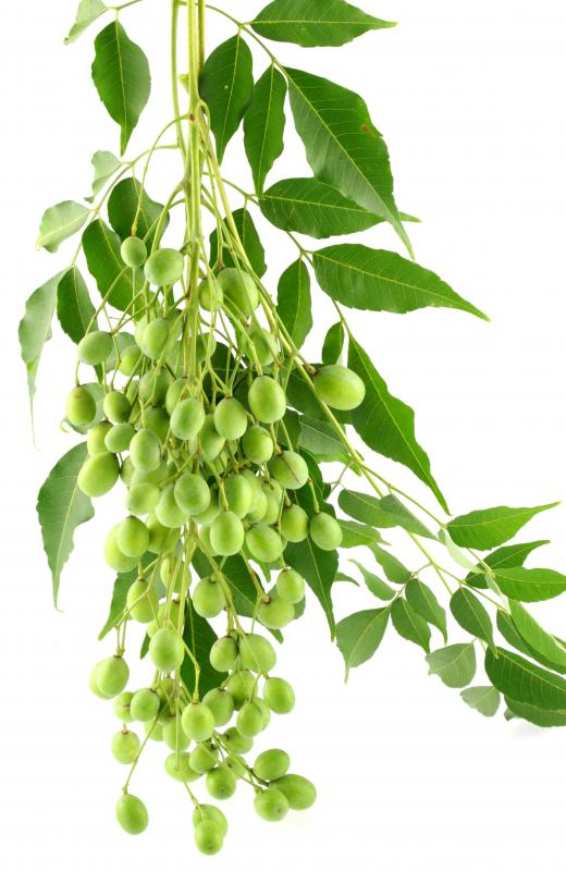 Oil derived from a neem tree is often included in hair products.